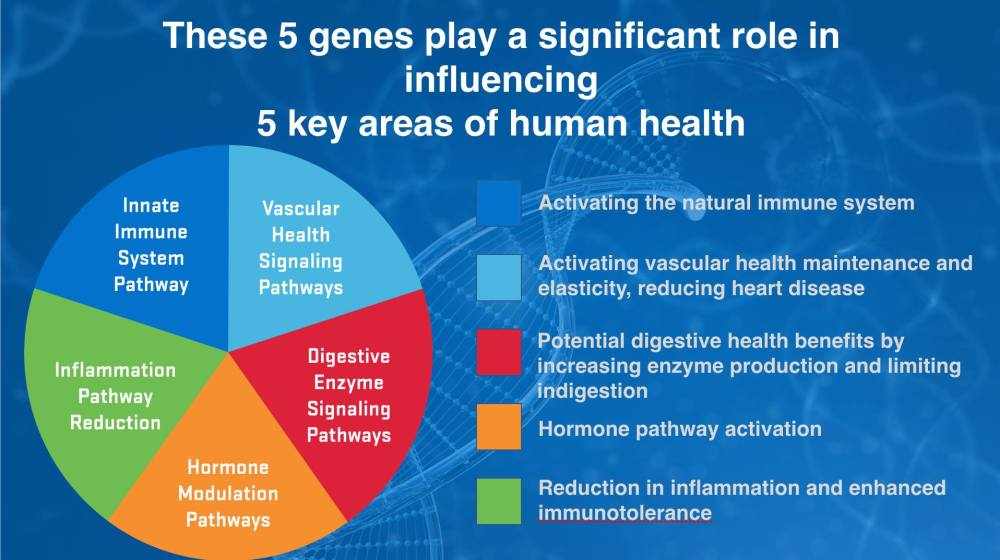 ASEA 5 genes play key roles influencing 5 areas health