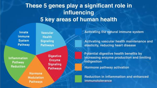 ASEA 5 genes play key roles influencing 5 areas health
